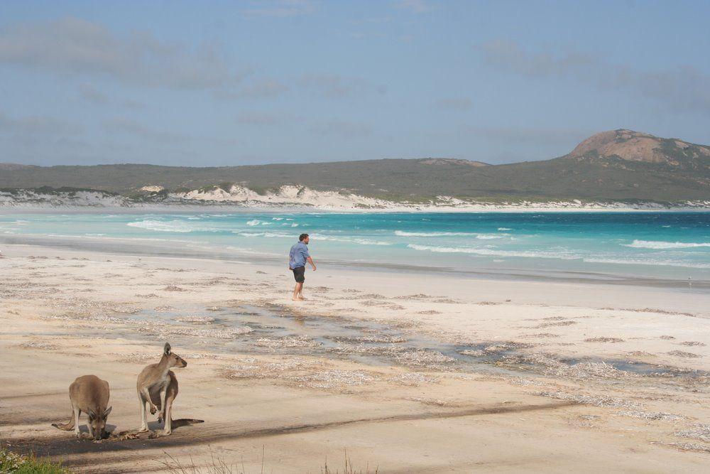 Australija: turistinės vizos eVisitor ir 676